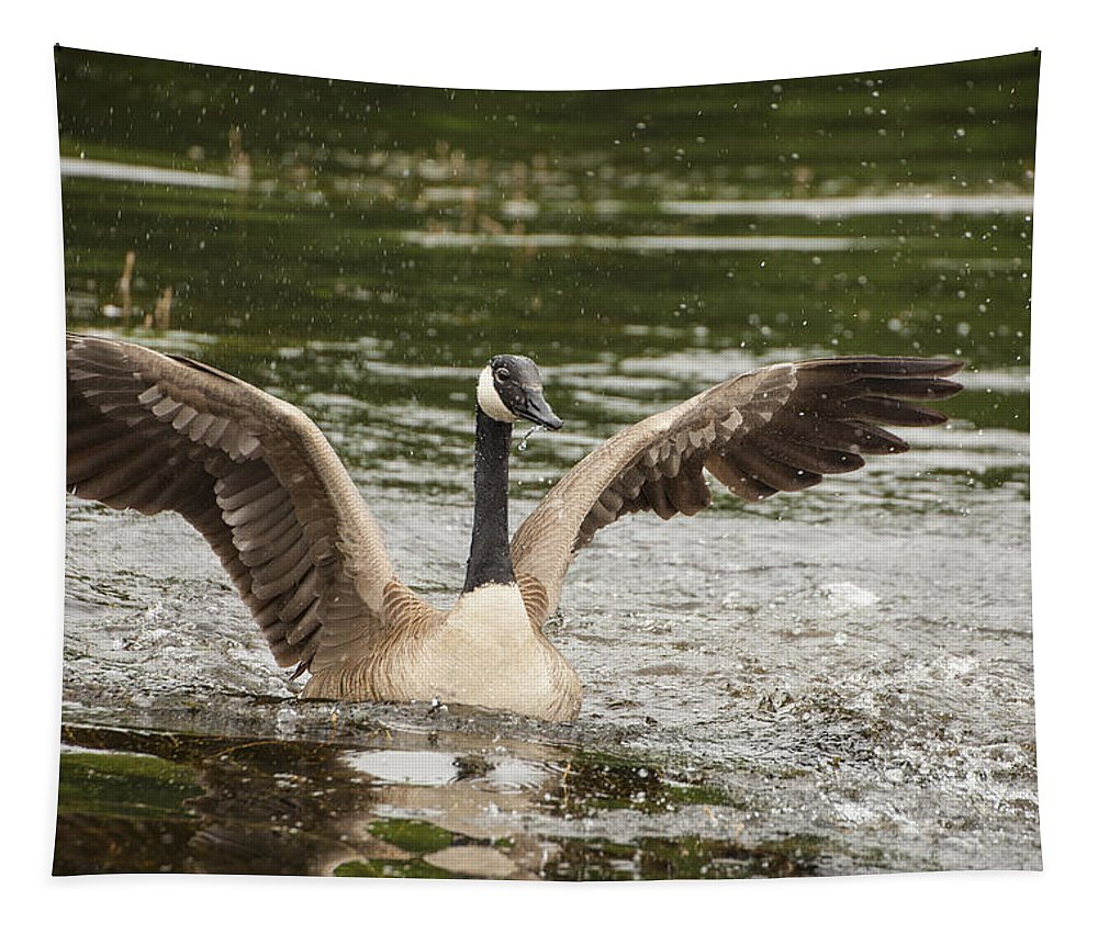 Canada Goose Tapestry featuring the photograph Goose Action by Karol Livote