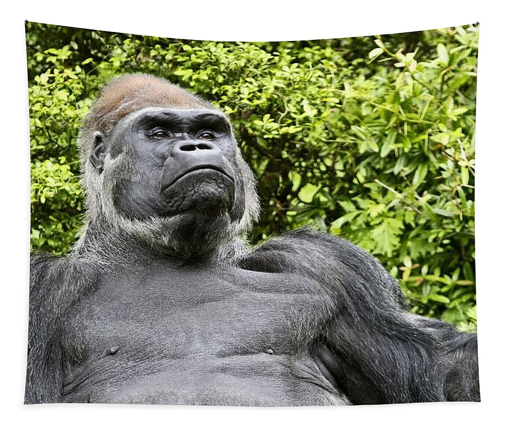 Gorilla Tapestry featuring the photograph Gorilla Look by Alice Gipson