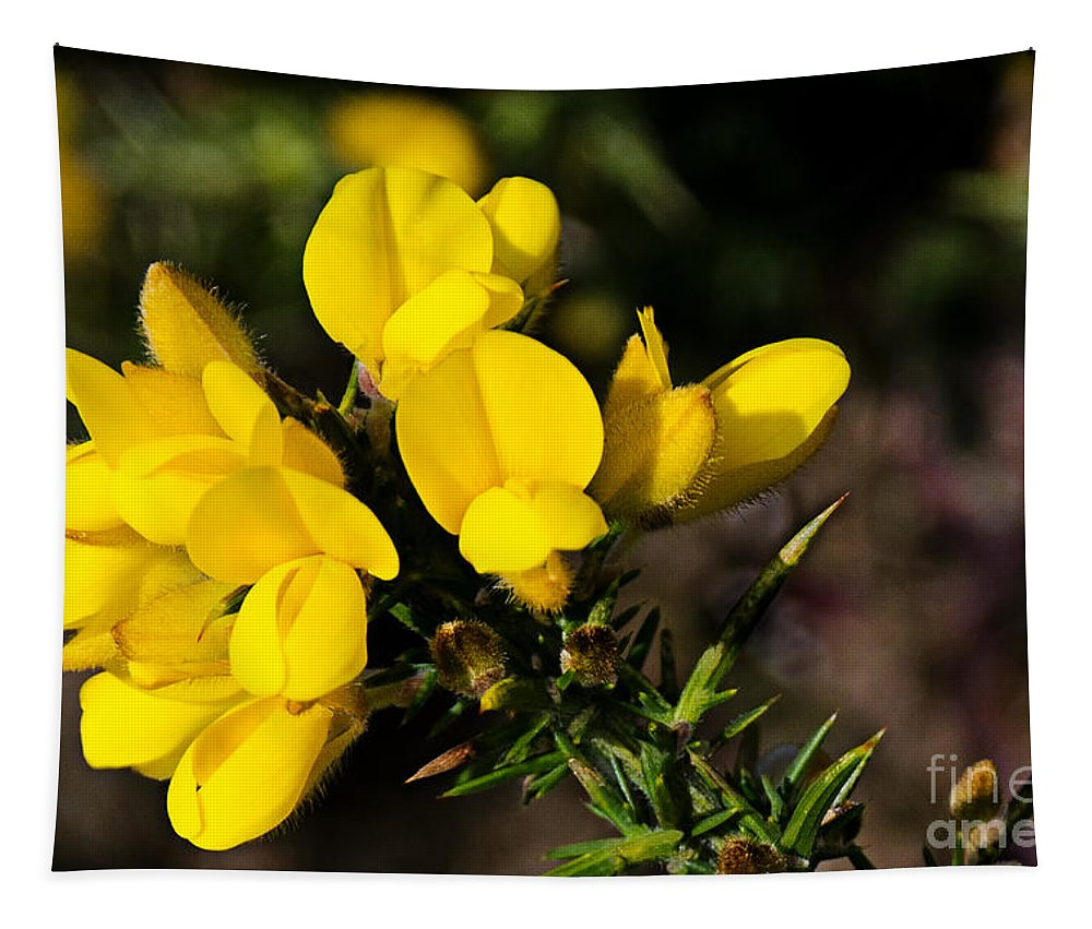 Gorse Tapestry featuring the photograph Gorse by Susie Peek