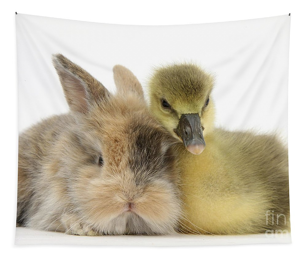 Gosling Tapestry featuring the photograph Gosling And Baby Bunny by Mark Taylor