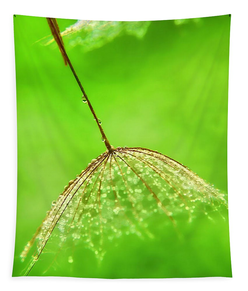 Abstract Tapestry featuring the photograph Gossamer Umbrellas by Susie Peek