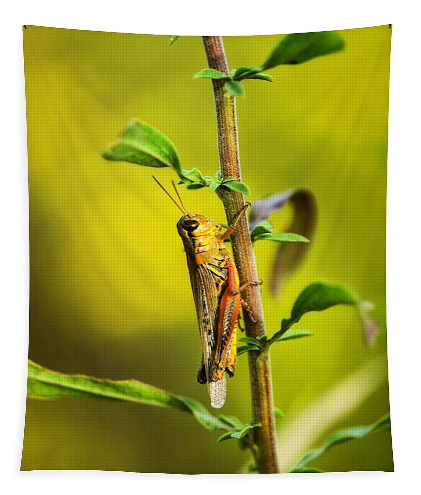Grasshopper Tapestry featuring the photograph Grasshopper Days by Susan Capuano
