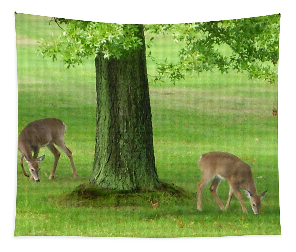 Deer Tapestry featuring the photograph Grazing by Aimee L Maher ALM GALLERY