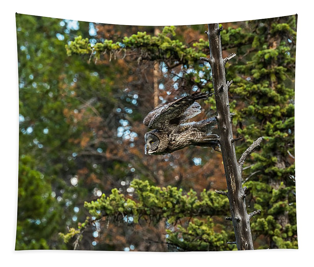 Great Grey Owl Tapestry featuring the photograph Great Grey Freefall by Yeates Photography