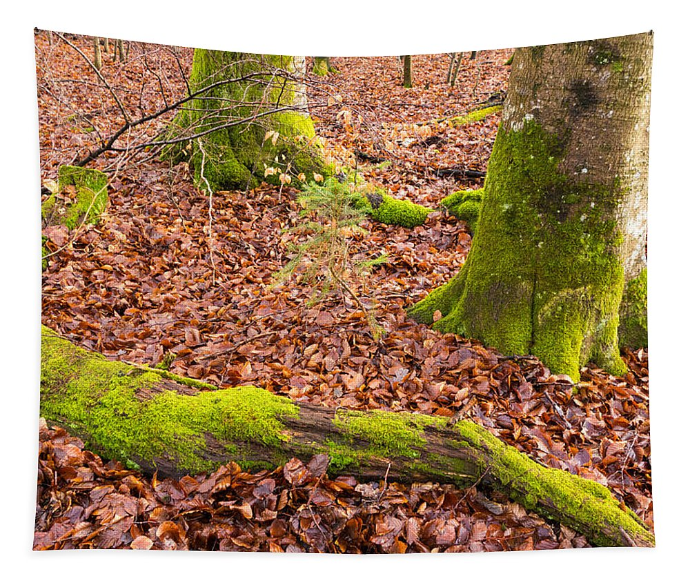 Green Tapestry featuring the photograph Green And Red Nature In The Forest by Matthias Hauser