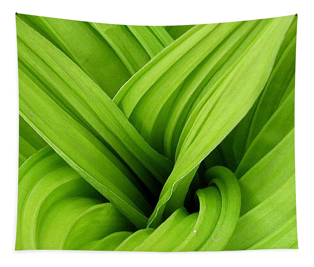 Plants Tapestry featuring the photograph Green Folds by Karol Livote