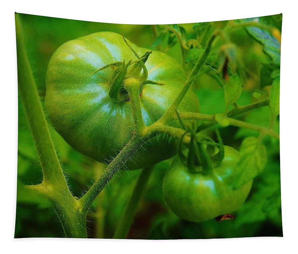 Tomatos Tapestry featuring the photograph Green Tomatos by Daniel Thompson