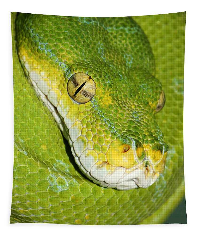 Green Tree Python Tapestry featuring the photograph Green Tree Python #2 by Judy Whitton