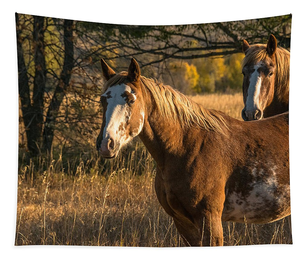 Appalousas Tapestry featuring the photograph Greeting Dawn by Yeates Photography