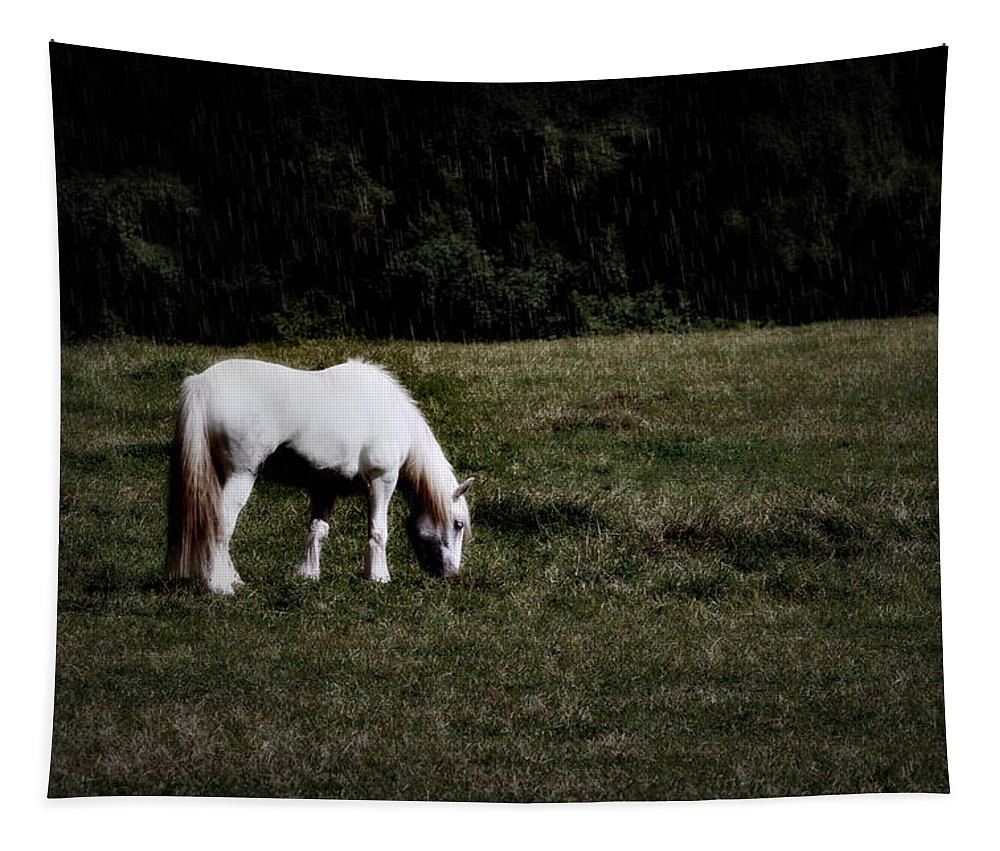 Horse Tapestry featuring the photograph Grey In The Pasture by Alice Gipson