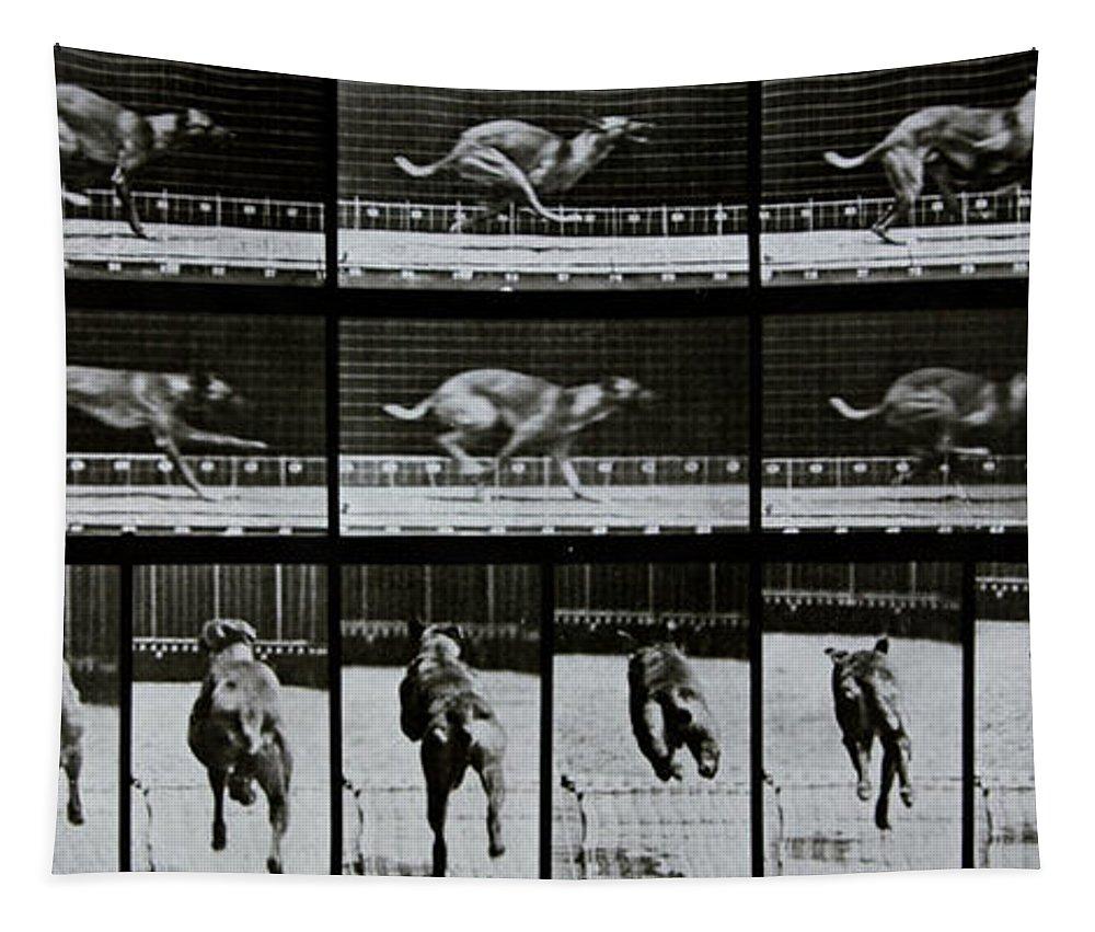 Muybridge Tapestry featuring the photograph Greyhound Running by Eadweard Muybridge