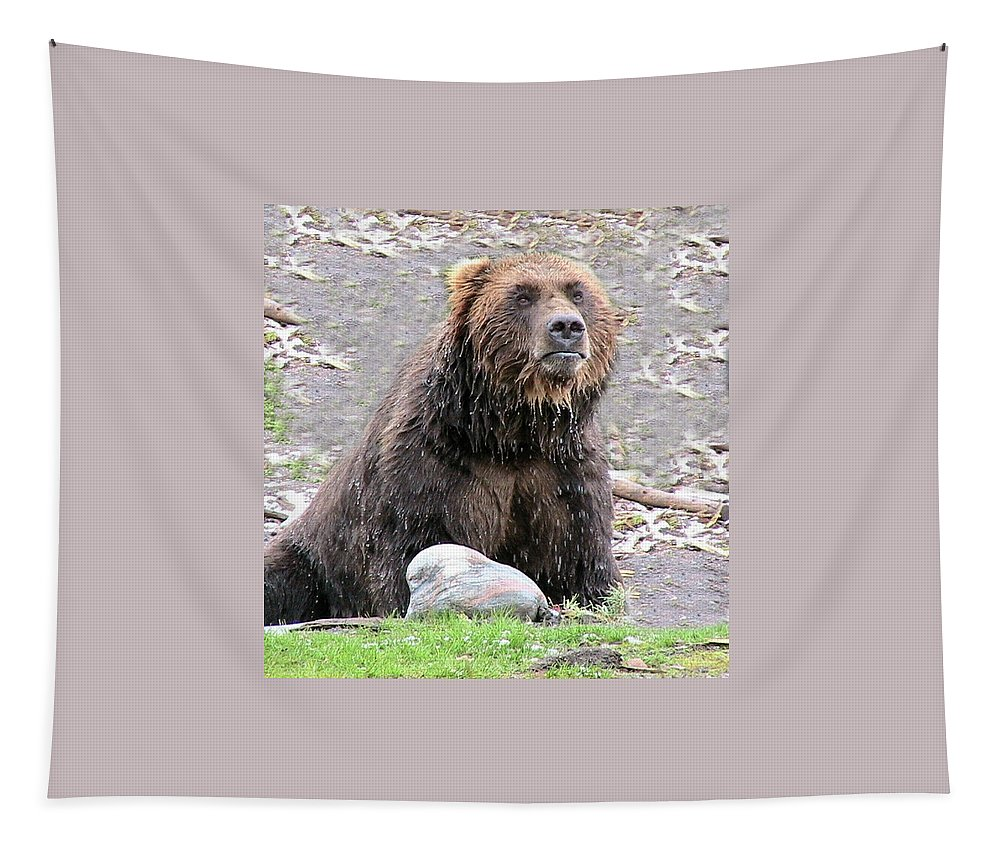 Animals Tapestry featuring the photograph Grizzly Bear 03 Postcard by Thomas Woolworth