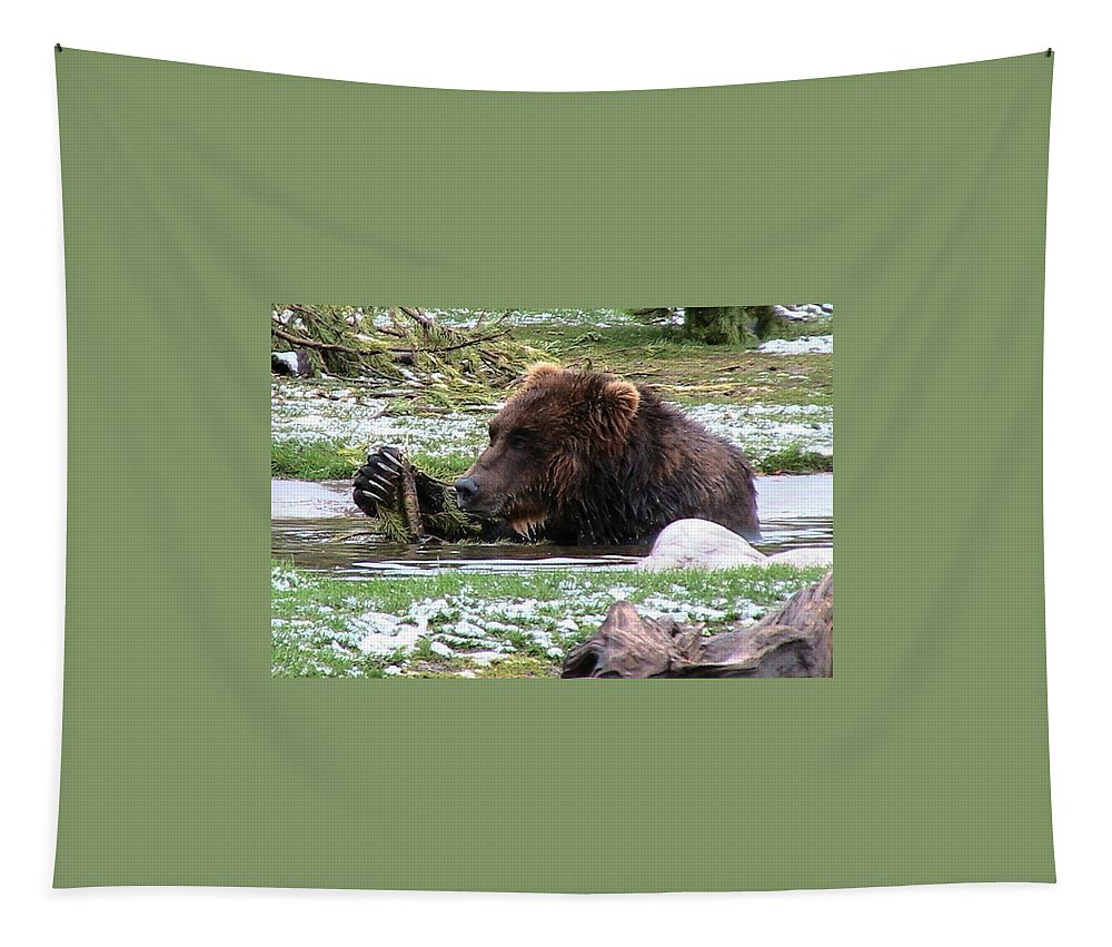 Animals Tapestry featuring the photograph Grizzly Bear 05 Postcard by Thomas Woolworth