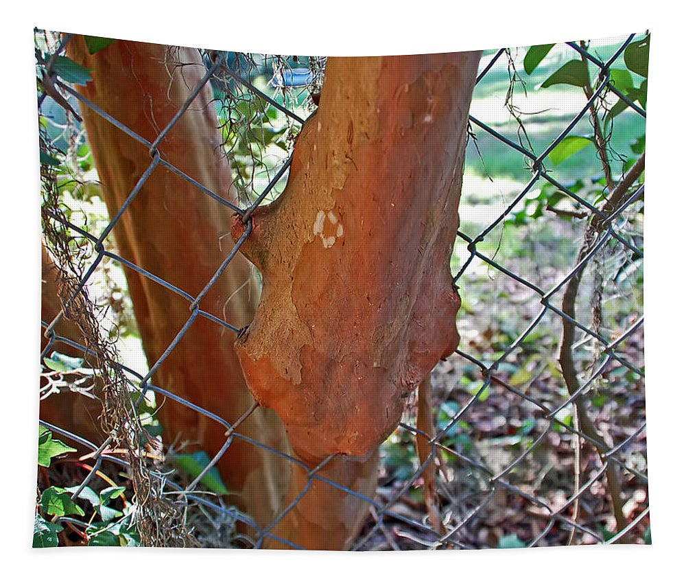 Fence Tapestry featuring the photograph Growing Through The Fence by Aimee L Maher ALM GALLERY