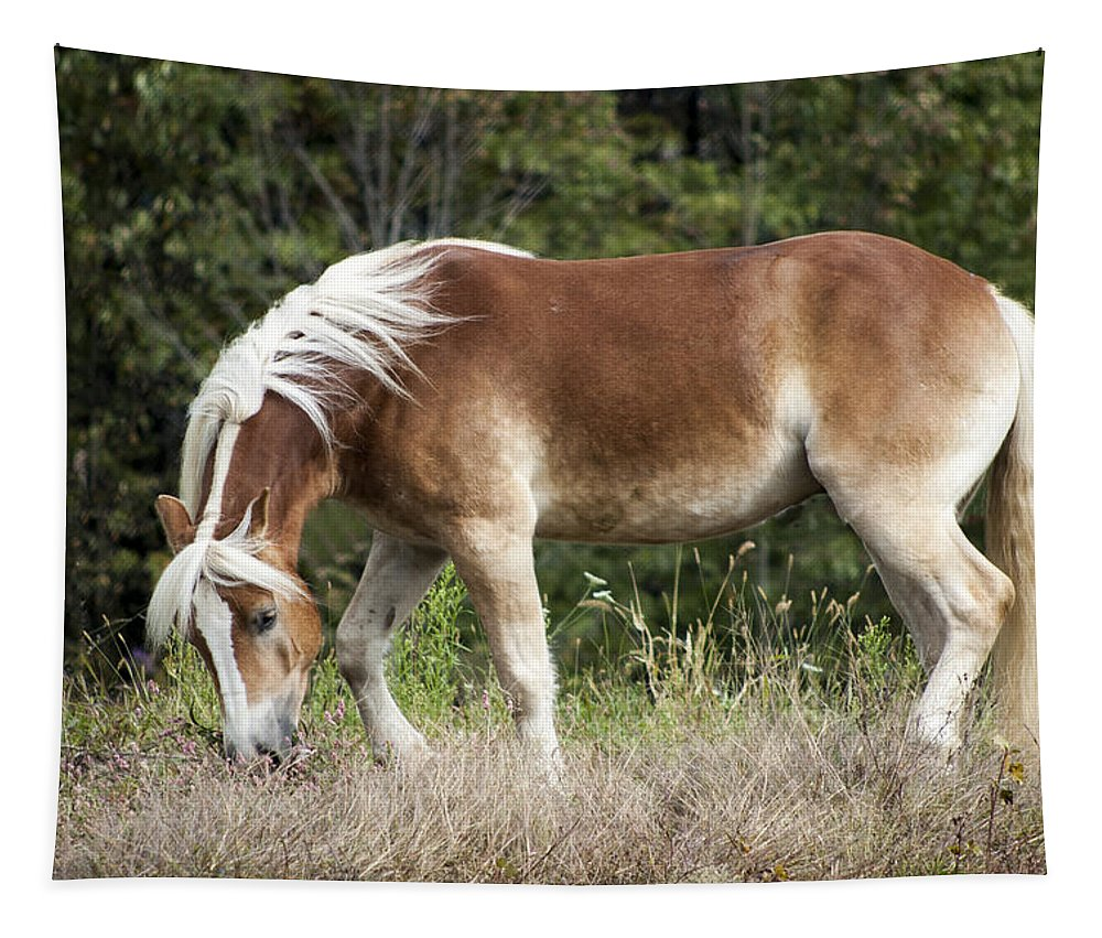 Haflinger Tapestry featuring the photograph Haflinger 1 by Annette Persinger