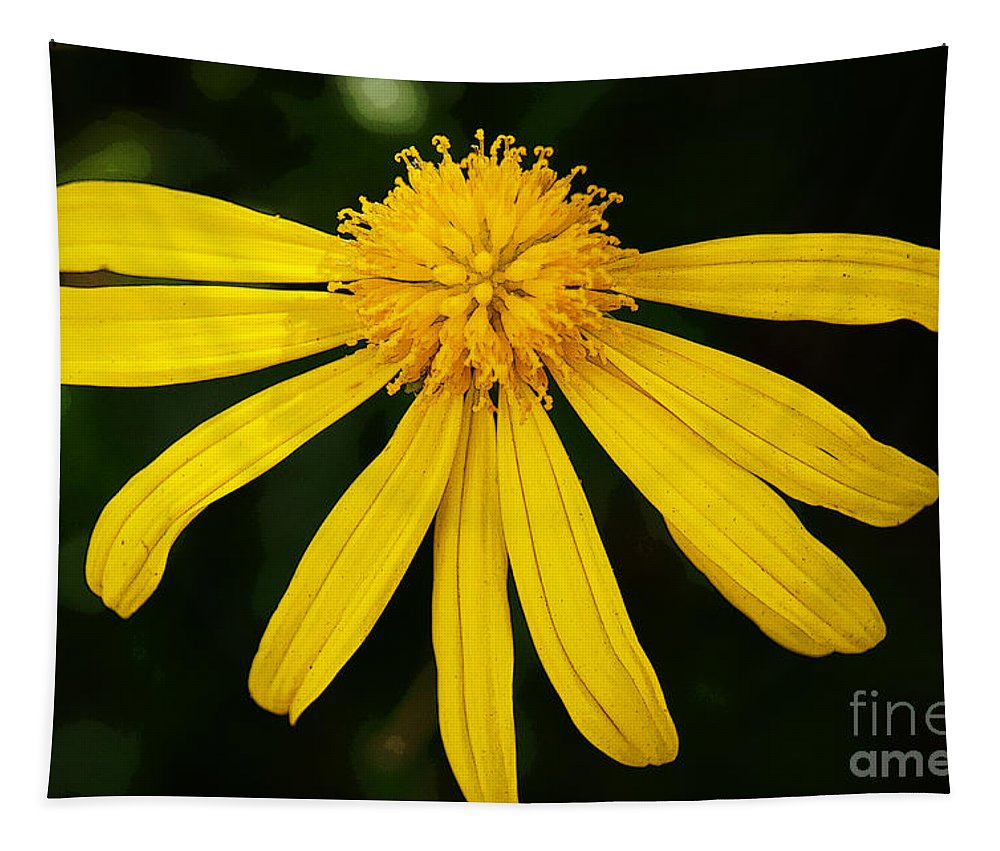Flowers Tapestry featuring the photograph Half Yellow by Ben Yassa
