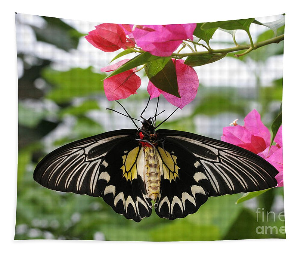 Butterfly Tapestry featuring the photograph Hanging On by Judy Whitton