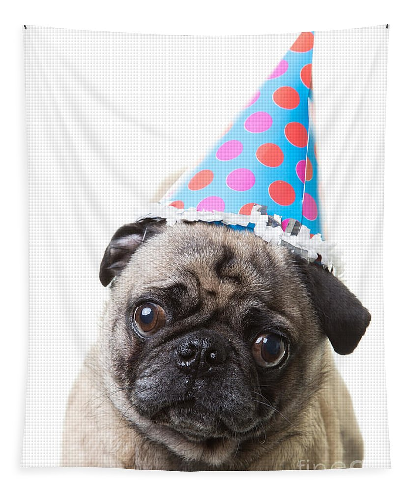 Happy Birthday Pug Card Tapestry For Sale By Edward Fielding