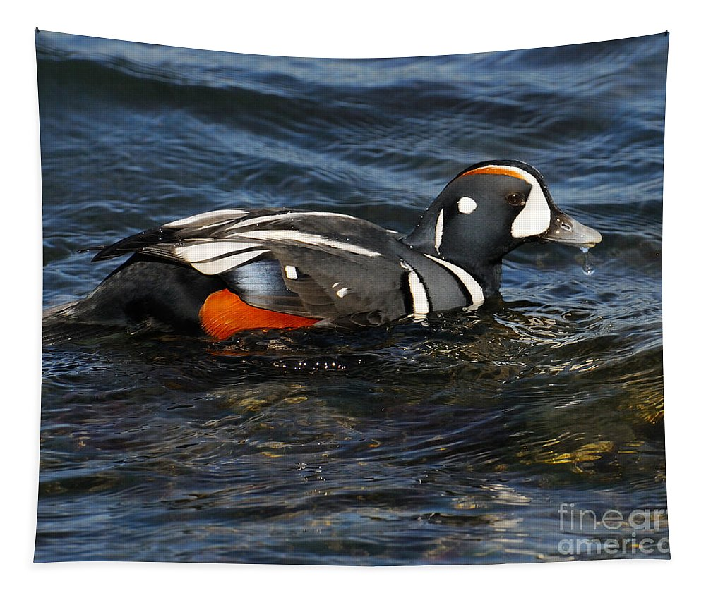 Harliquin Duck Tapestry featuring the photograph Harley by Craig Leaper