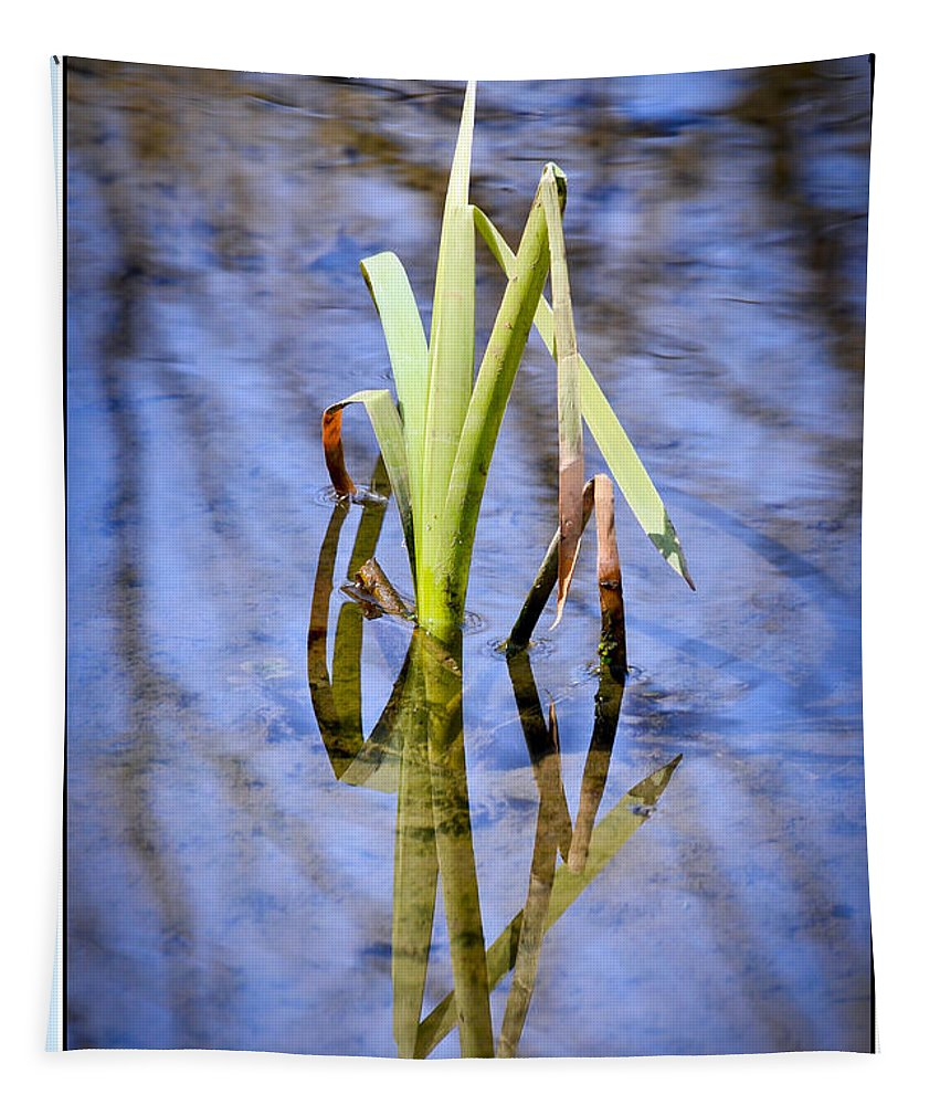 Cattails Tapestry featuring the photograph Harmony by Kerri Farley