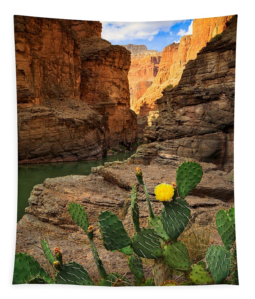 America Tapestry featuring the photograph Havasu Cactus by Inge Johnsson