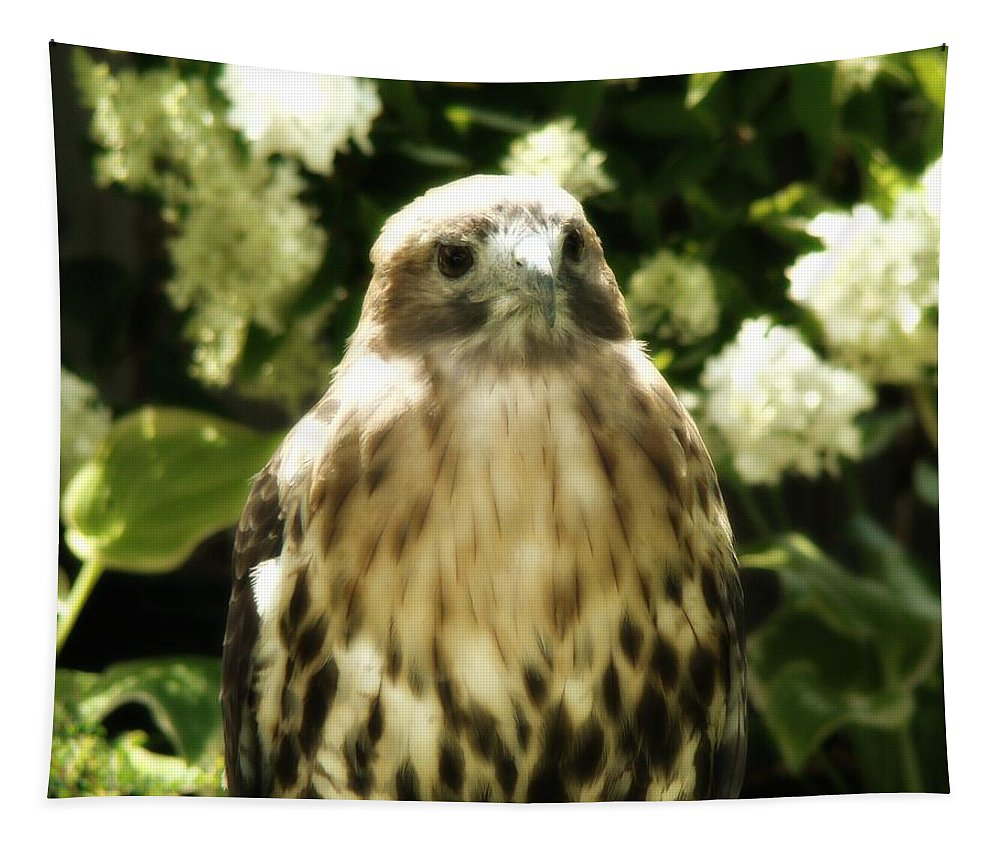 Hawk Tapestry featuring the photograph Hawk Portrait by Gothicrow Images