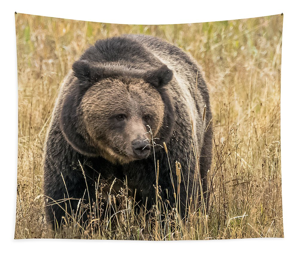 Grizzly Bear Tapestry featuring the photograph Hayden Valley Sow In Tall Grass by Yeates Photography