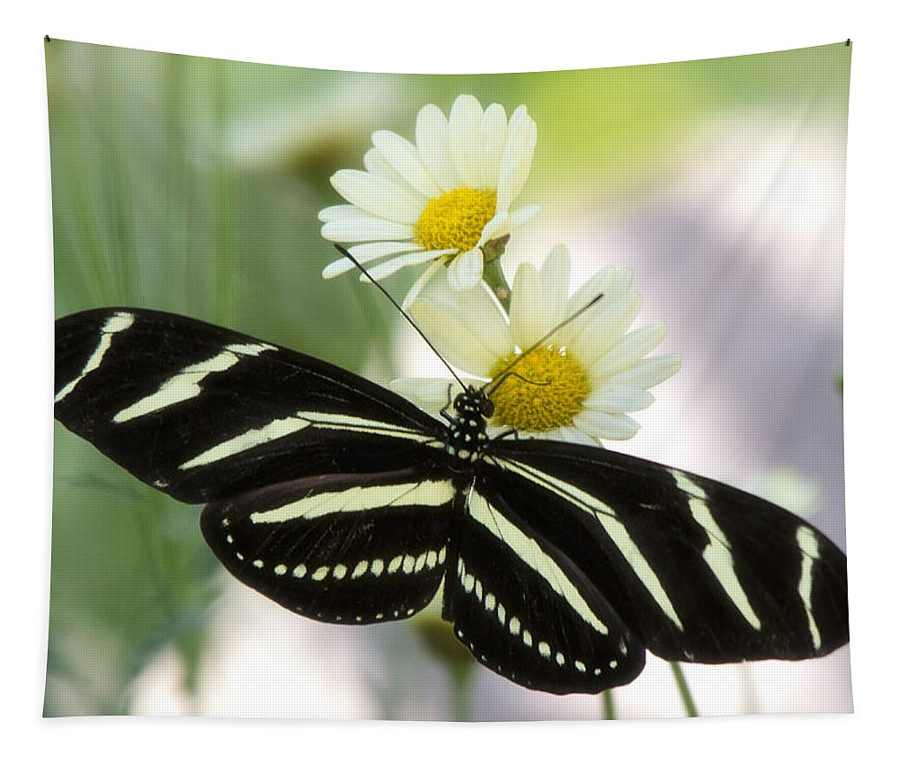 Heliconius Charithonia Tapestry featuring the photograph Heliconius Charithonia by Saija Lehtonen