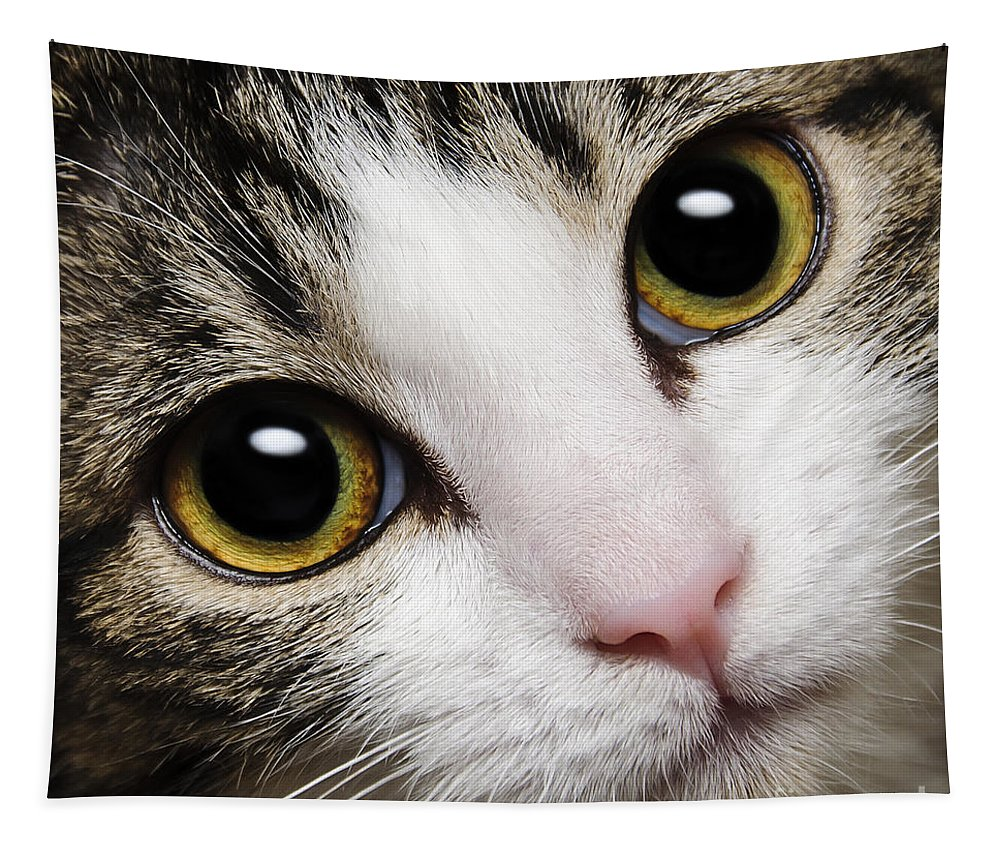 Andee Design Cats Tapestry featuring the photograph Here Kitty Kitty Close Up by Andee Design