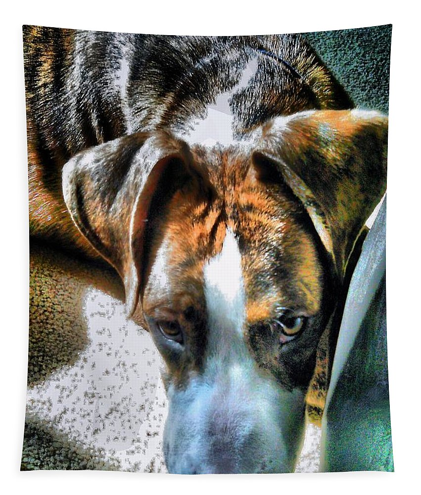 Dogs Tapestry featuring the photograph Here's Lookin Atchya by Robert McCubbin