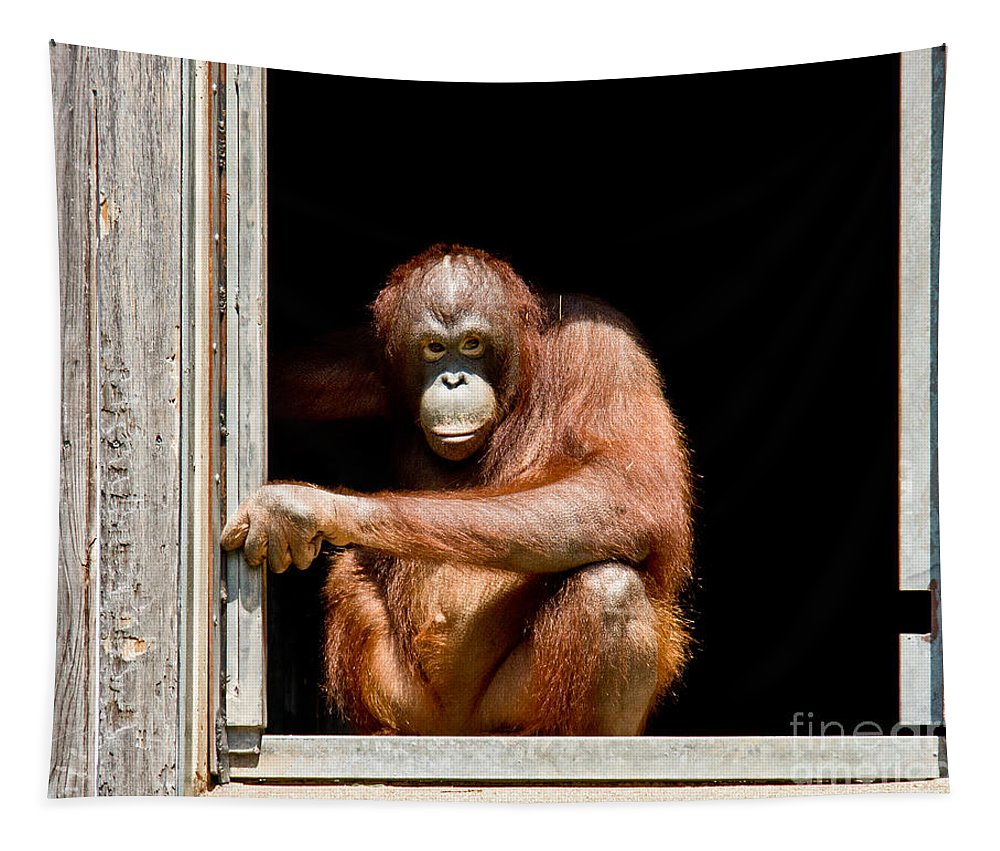 Orangutans Tapestry featuring the photograph Here's Looking At You by Tom Gari Gallery-Three-Photography