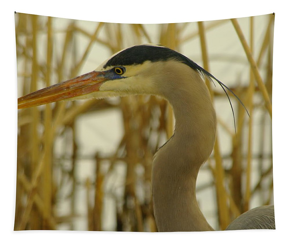 Heron Tapestry featuring the photograph Heron Close Up by Jeff Swan