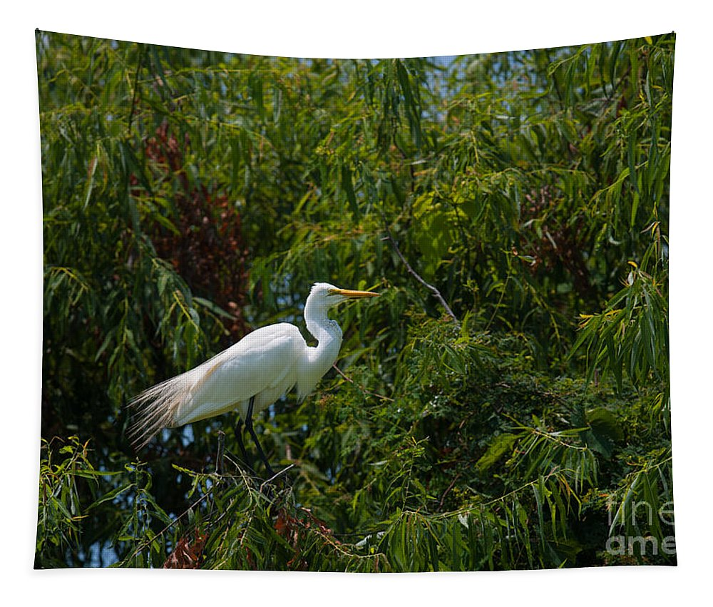 Egret Tapestry featuring the photograph Heron In Tree by Dale Powell
