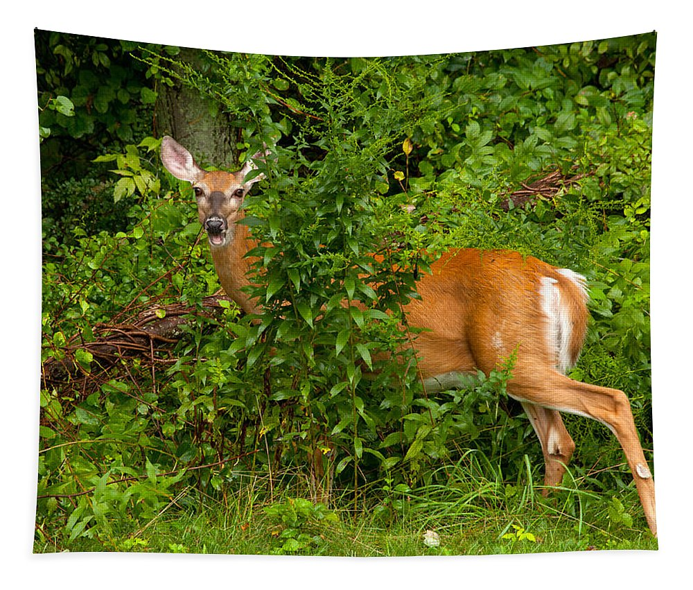 Deer Tapestry featuring the photograph Hey I Eating Here by Karol Livote