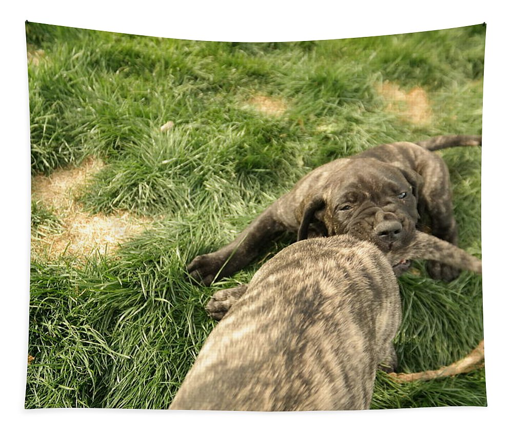Dogs Tapestry featuring the photograph Hey You Come Back Here Buddy by Jeff Swan
