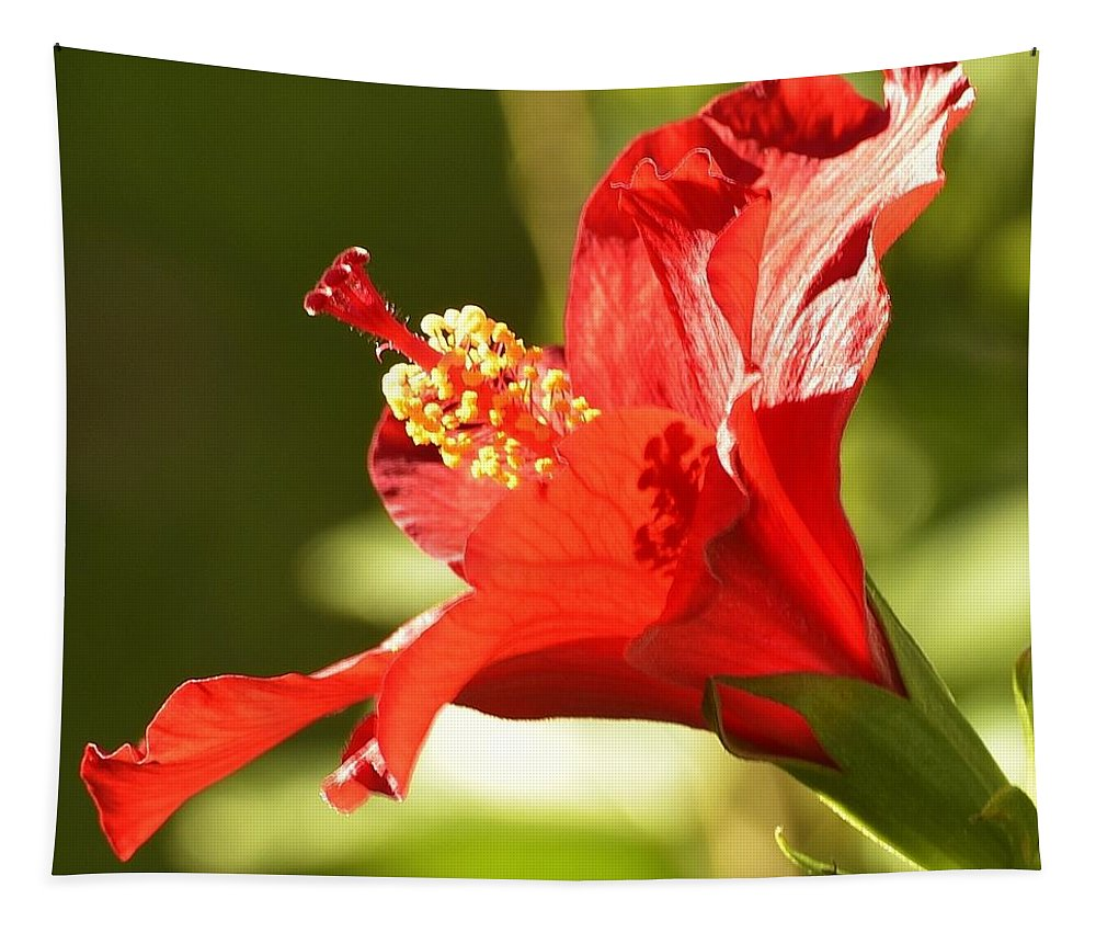 Linda Brody Tapestry featuring the photograph Hibiscus Loving Sun by Linda Brody