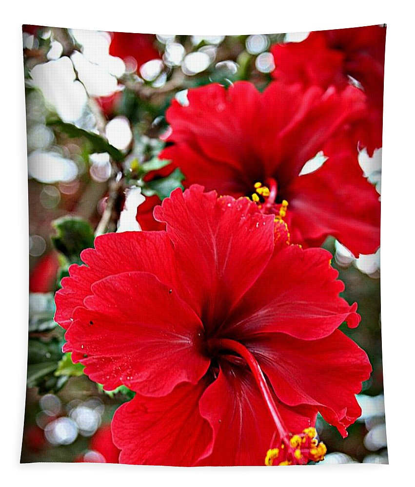 Hibiscus Flowers Tapestry featuring the photograph Hibiscus Perspective by Clare Bevan
