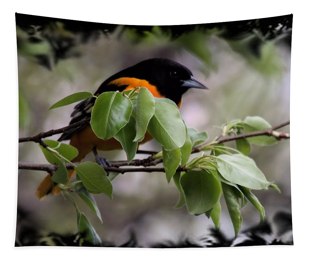 Oriole Tapestry featuring the photograph Hiding Out by Bonfire Photography