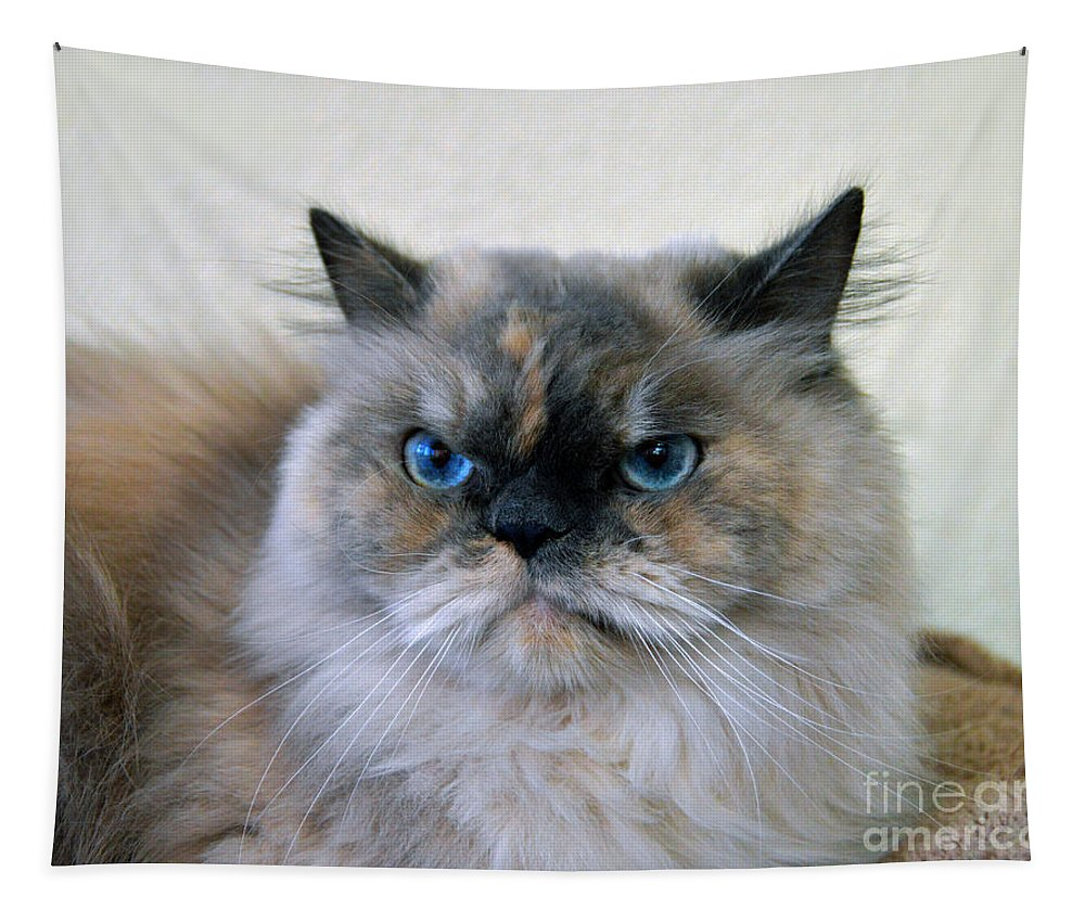 Purebred Tapestry featuring the photograph Himalayan Persian Cat by Catherine Sherman
