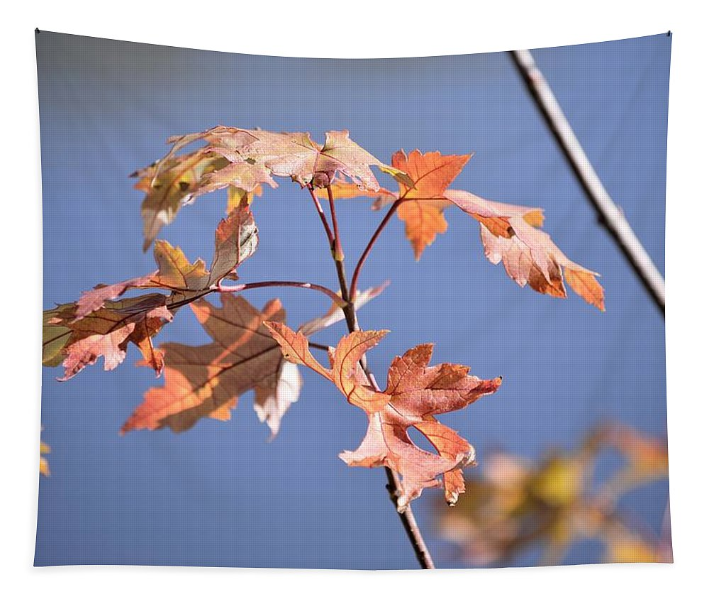 Maple Tapestry featuring the photograph Holding On by Bonfire Photography