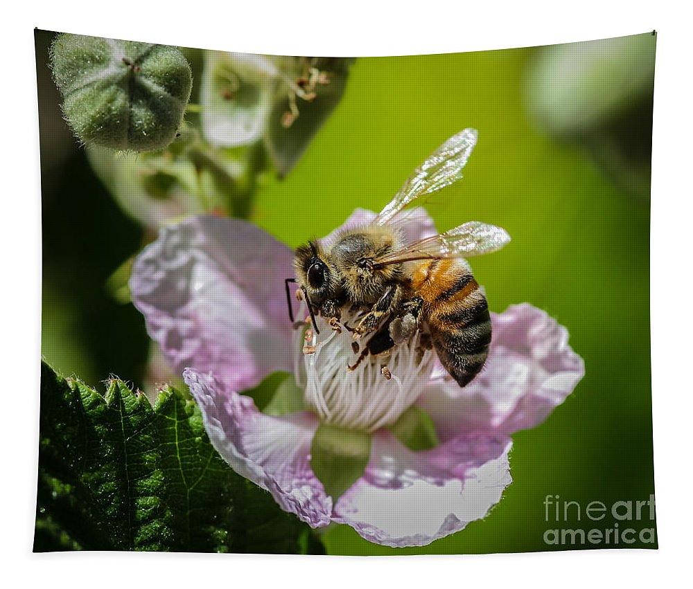 Honey Bee And Blackberry Tapestry featuring the photograph Honey Bee And Blackberry by Mitch Shindelbower