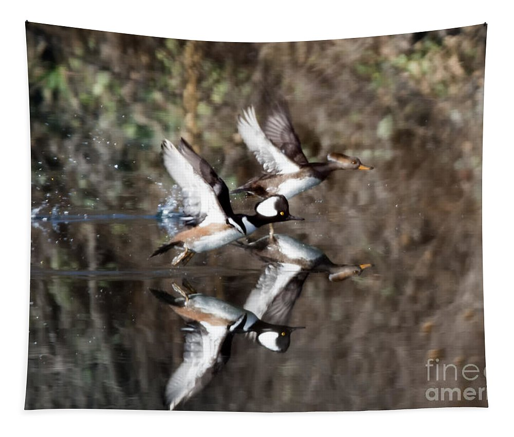 Hooded Merganser Tapestry featuring the photograph Hooded Merganser Mirror by Mike Dawson
