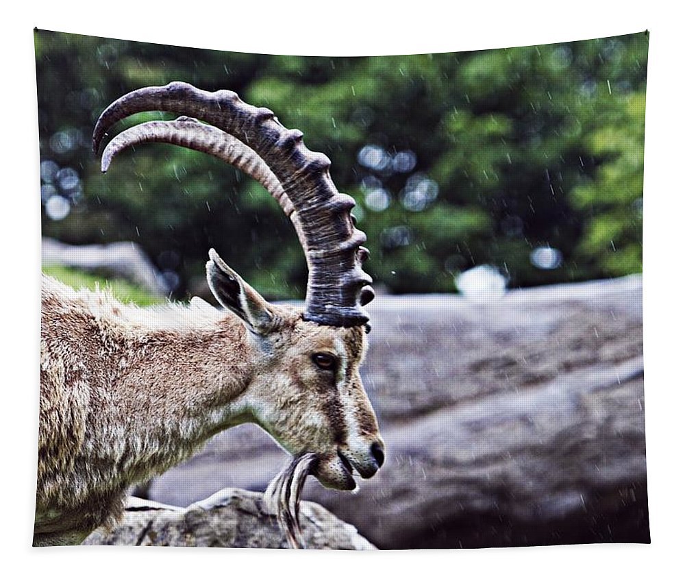 Sheep Tapestry featuring the photograph Horned Sheep by Alice Gipson