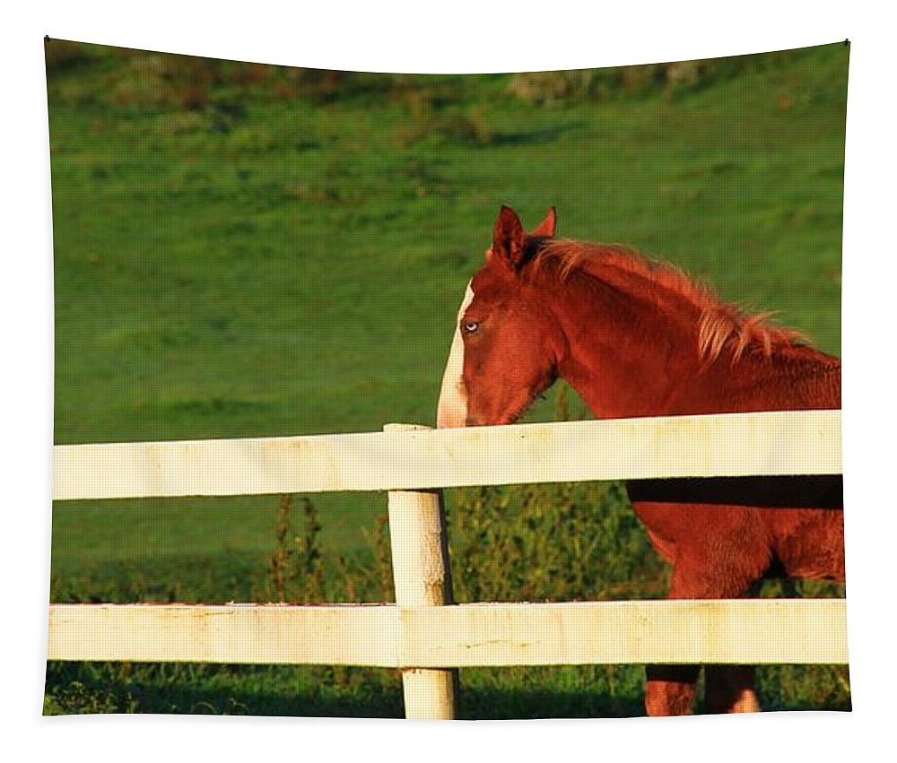 Blue Eyed Horse Tapestry featuring the photograph Horse And White Fence by Dan Sproul