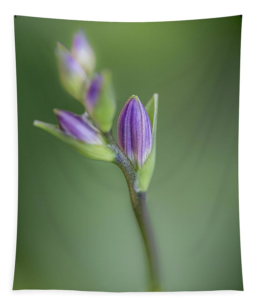 Hosta Bud Tapestry featuring the photograph Hosta Bud by Dale Kincaid