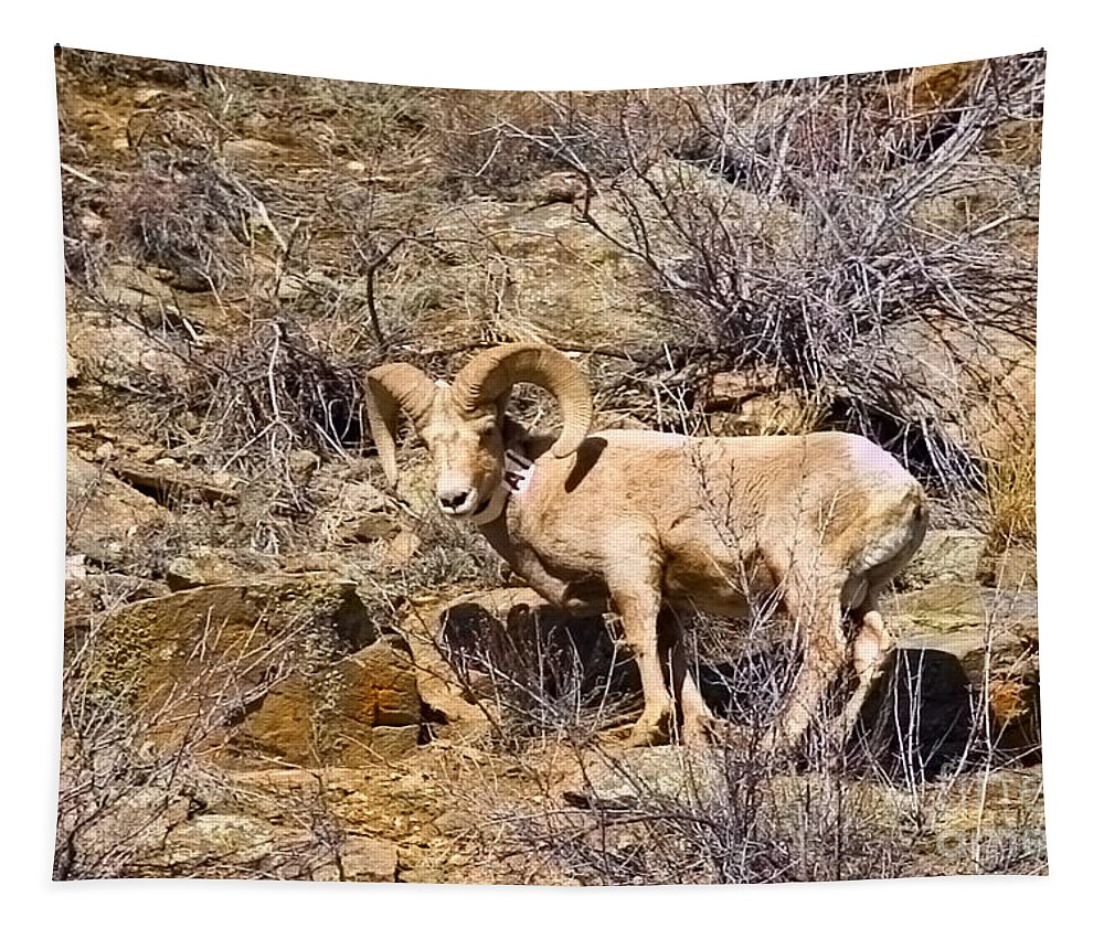 Big Horn Tapestry featuring the photograph Huge Bighorn by Steve Krull
