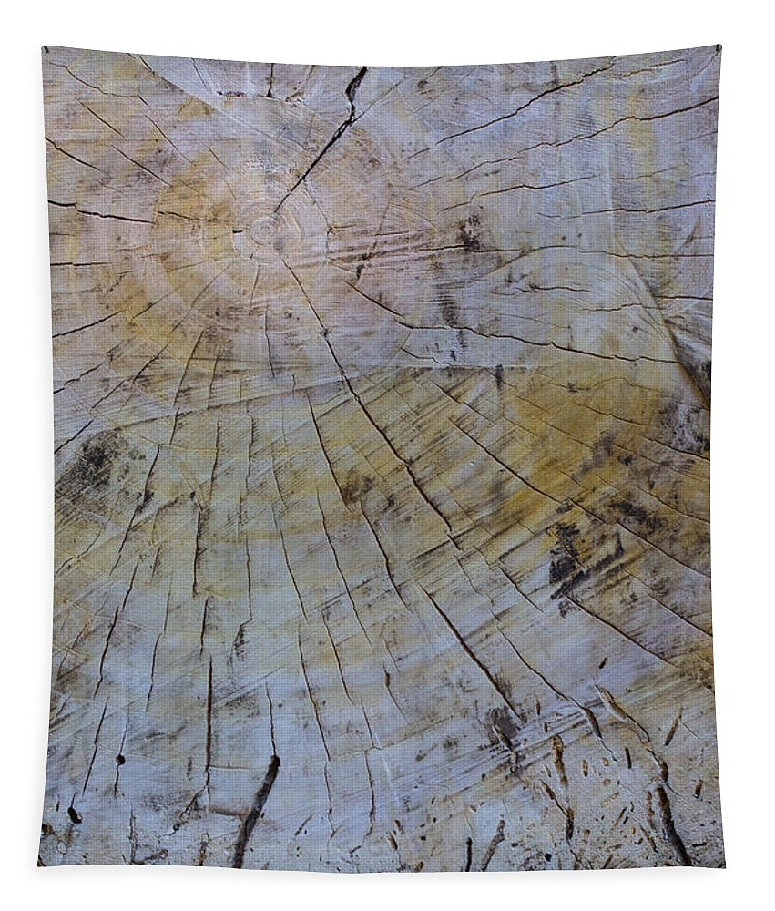 Trees Tapestry featuring the photograph Huge Stump by Robert Storost