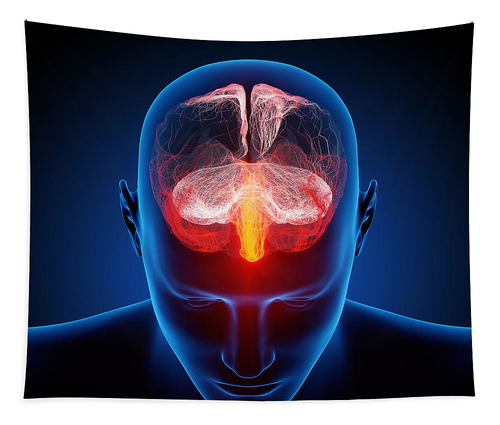 Brain Tapestry featuring the photograph Human Brain by Johan Swanepoel