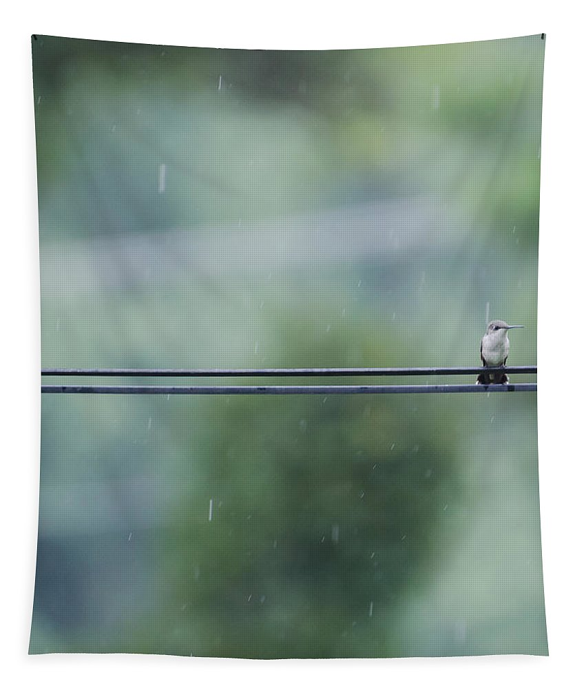 Hummingbird Tapestry featuring the photograph Hummer In The Rain by Heather Applegate