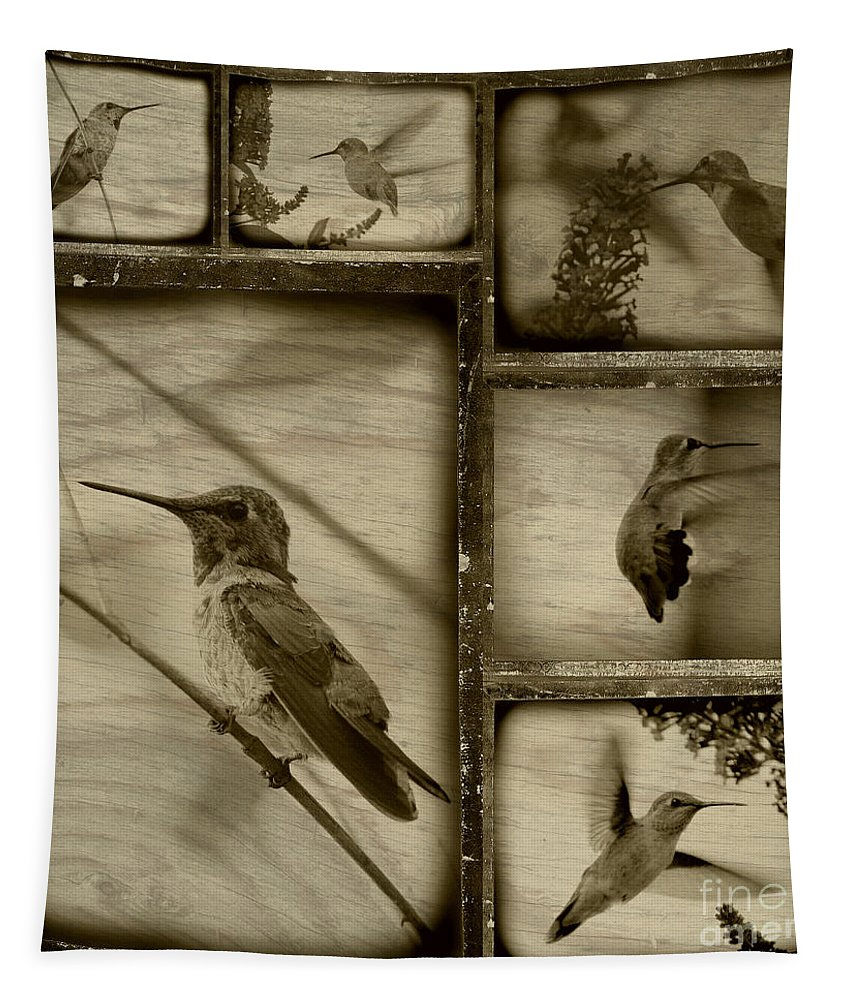 Hummingbirds Tapestry featuring the photograph Hummingbird Family Portraits by Carol Groenen